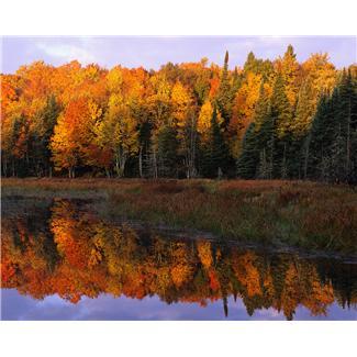 Fall In Lake Arrowhead Village 2014 Arrowhead Property