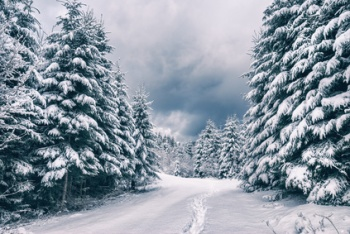 Winter view in a Carpathian mountain forest covered with fresh snow. Ukraine, Europe