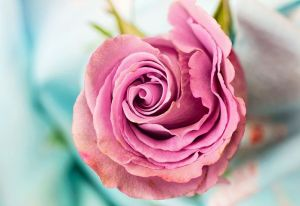 Lake Arrowhead Flowers Roses