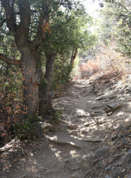 Lake Arrowhead Hiking Trails 2