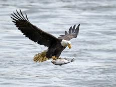 Bald Eagle Lake Arrowhead