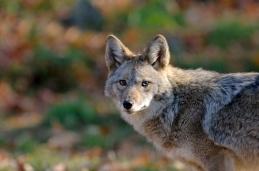 Coyotes Lake Arrowhead