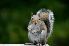 Grey Squirrel Lake Arrowhead