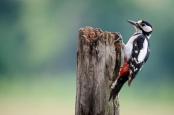 Woodpeckers Lake Arrowhead