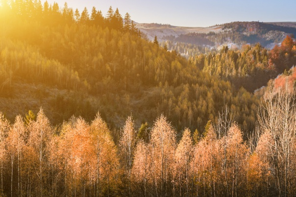 The rural houses on mountain farm in forest under rocks. Morning frost in magical golden autumn. In the backlight warm sunbeam light and a light shallow fog. Yellow-hot leaves on the tops of birches.